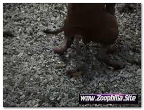 103 – Zoo Scat