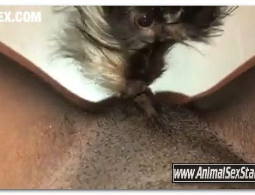 Amateur ZooSex – Part 2 Puppy Eat Virgin Black Pussy